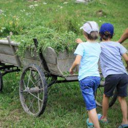 paradisul copiilor ferma de sub penteleu (4)