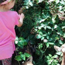 paradisul copiilor ferma de sub penteleu (6)